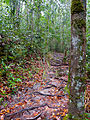 Roots Stairway (15579651419).jpg