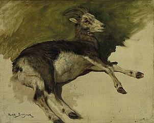 A she-goat