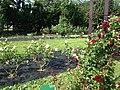 Rose Garden in Umino Nakamichi Seaside Park 5.JPG