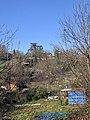 Route des Écassaz (Belley) - jardins familiaux.jpg