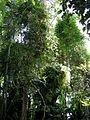 Royal Botanic Gardens, Sydney 05.JPG