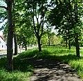Ruhiger Radweg parallel zur B 9 - panoramio.jpg