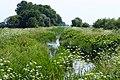 Rzeka Kłodawa. Okolice wsi Łęgowo, pow. gdański - panoramio (1).jpg