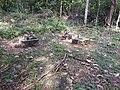 Saasthan-5-kallar-meenmudii-kerala-India.jpg