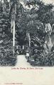 Saint-Pierre, jardin des Plantes.png