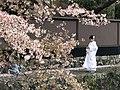 Sakura 2018 (40380331805).jpg