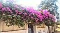 Salaiya, Madhya Pradesh 471101, India - panoramio (33).jpg