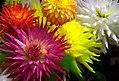 "San Francisco - Golden Gate Park ""Conservatory Of Flowers"" (487631709).jpg"