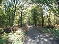 Sandy Lane, Albury Heath - geograph.org.uk - 70924.jpg