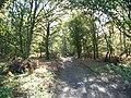 Sandy Lane, Albury Heath - geograph.org.uk - 70924.jpg