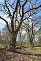 Schleswig-Holstein, Drage, Naturdenkmal 13 NIK 2041.JPG