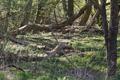 Schlitz Pford Fraurombach Breitecke NR 81455 Dead Wood N.png