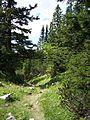 Schneeberg-pinewood.jpg