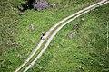 Schweiz Reise Sommer 2013 Ansichten 33.jpg
