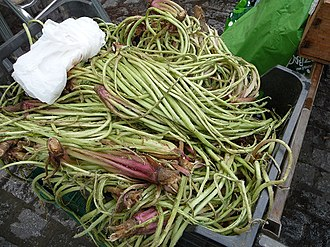 Scolymus - leaves stripped to the middle vein for sale as vegetables