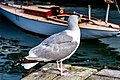 Seagull Harbour Halifax (26375043038).jpg