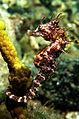 Seahorse*.JPG