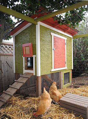 A chicken coop in a Seattle backyard.