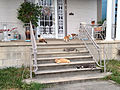 Seven Cats on the Front Porch.jpg