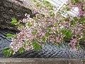 Shinkawa with Cherry Blossom Apr. 2, 2021.jpg
