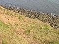 Shoreline Under North Cliff - geograph.org.uk - 1267865.jpg