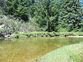 Siltcoos River greenery.JPG