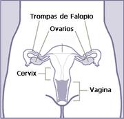 Esquema del sistema reproductor femenino.
