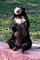 Sitting Sloth Bear.jpg
