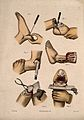 Six diagrams illustrating cross-sections through the foot, a Wellcome V0016841EL.jpg