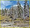 Skeletons, Yellowstone N.P. 9-11 (13784826283).jpg