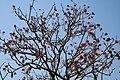 Sky & Tree, Saatchori National Park, Hobigonj, Sylhet, Bangladesh.jpg
