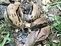 Slug cannibalism.jpg