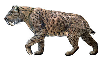 Saber-toothed cat - Reconstruction of a Smilodon