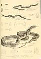 Snakes by Albert Gunther (4).jpg