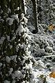 Sneeuw in Meerdaalbos - 372739 - onroerenderfgoed.jpg