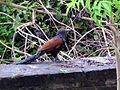Southindianbird.jpg