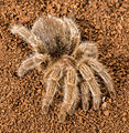 Spider111.jpg