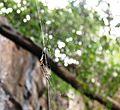 Spider in its Web.jpg
