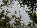 Spider web at munnar.JPG