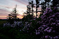 Spring-sunset-mountain-wildlflowers - West Virginia - ForestWander.jpg