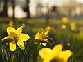 Spring in Ruskin Park (13041033834).jpg