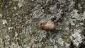 Spring lichens 10.png