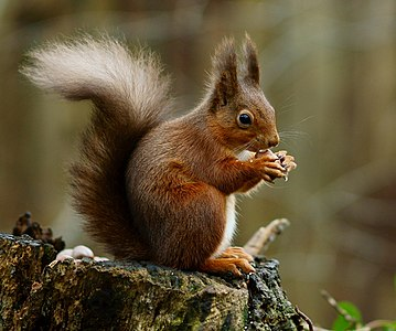 a squirrel posing.