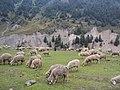 Srinagar - Sonamarg views 79.JPG