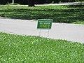 St Charles Avenue at Audubon Park New Orleans 11 June 2020 11.jpg