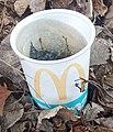 Stagnant water McDonalds cup.jpg