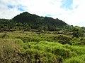 Starr-041106-0418-Cinnamomum camphora-habit-Ulupalakua-Maui (24693044256).jpg