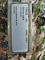 Starr-091104-0981-Dillenia indica-plant tag-Kahanu Gardens NTBG Kaeleku Hana-Maui (24961642726).jpg