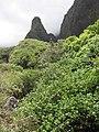 Starr-120522-6689-Hibiscus tiliaceus-habitat view needle-Iao-Maui (25050843121).jpg