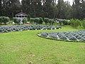 Starr-141103-5253-Lavandula sp-plantings-Maui Lavender Kula-Maui (25155335821).jpg